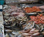 pescheria catania